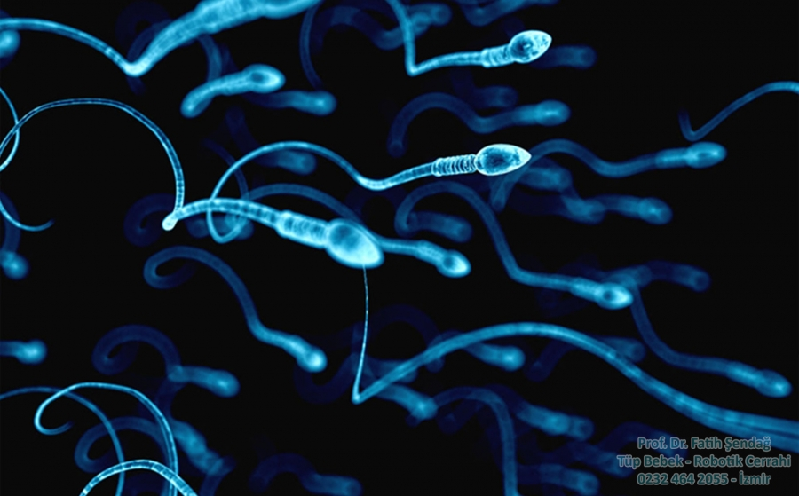 sperm analizi